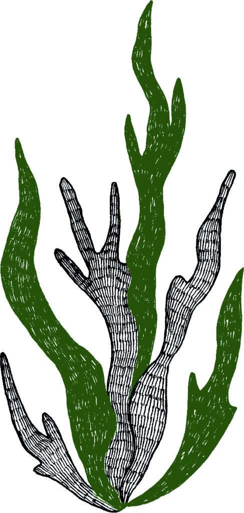 Spiruline, illustration par Naetur